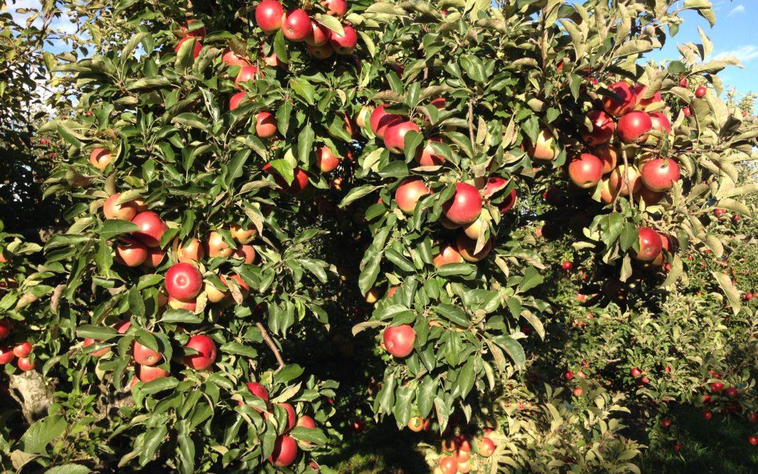 Apple Orchard Wedding Venue